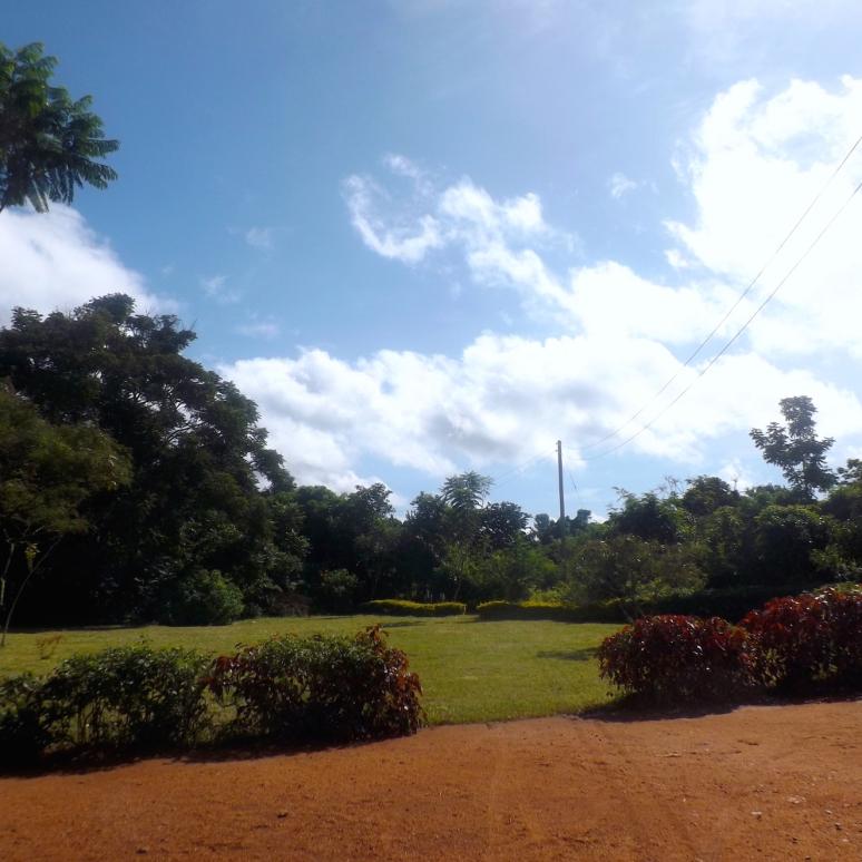 The Dewe Project's Garden